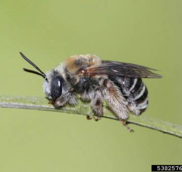 Bees-370x350 A & A Pest Control | Manchester, CT - Get $25  OFF Seasonal Services