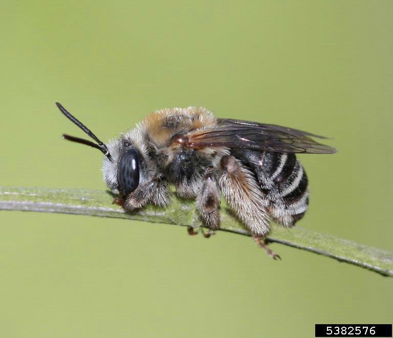 Bees Bees  & Wasps