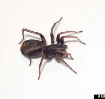 Spiders-370x350 SERVICES