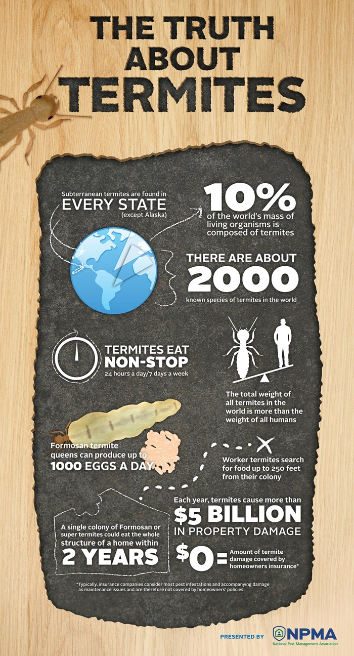truth-about-termites-infographic Truth About Termites - Infographic
